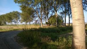 19- abelen langs de weg naar de boerderij