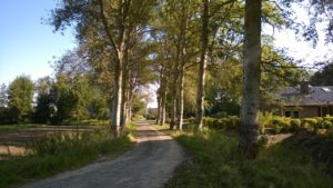 2 - abelen vanaf ingang richting Gerniersdyk