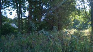 5 - begroeiing ingang