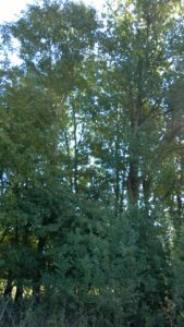7- begroeiing langs de zijkant
